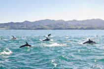 Pod of dolphins jumping over water — Stock Photo