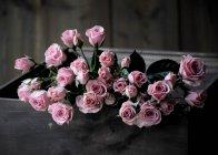 Розовые розы в ящике — стоковое фото
