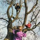 Trois enfants escalade arbre — Photo de stock