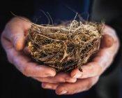 Mani maschile che tiene un uccello nido — Foto stock