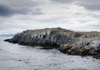 Морской лев колонии на скалах — стоковое фото