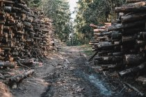 Road through forest lined with timber — Stock Photo