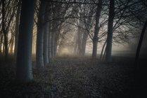 Camino en el bosque en la niebla - foto de stock