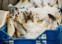 Vista del primo piano di pesci freschi nel mercato di strada — Foto stock