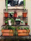 Plantas em vaso em pé contra a parede do edifício — Fotografia de Stock