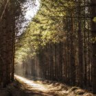 Scenic view of morning light on woodland path — Stock Photo