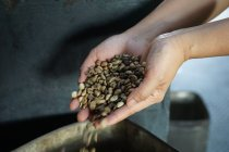 Imagen recortada de manos femeninas sosteniendo granos de café crudos - foto de stock