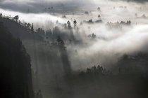 Indonésie, Bali, Kintamani, brouillard matinal sur la forêt — Photo de stock