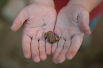 Cropped image of Boy holding a small toad against blurred background — Stock Photo
