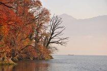 Arbres sur la rive du lac de Zoug, Suisse — Photo de stock