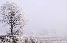 Vista panorámica de nieve cubre el paisaje con árboles - foto de stock