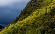 Montagne couverte de forêts, réserve de Chine Muerta, Chili — Photo de stock