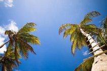 Malerische Aussicht auf Palmen mit Leiter Stufen — Stockfoto