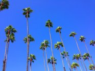 Low angle view of palm tree tops — Stock Photo