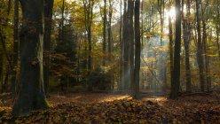 Majestuosa vista de bosque hermoso con la luz del sol escénica - foto de stock