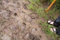 Immagine ritagliata dell'uomo in piedi accanto a tracce di animali nel fango — Foto stock