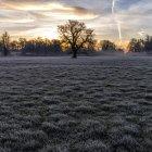 Bäume auf vereistem Feld unter dramatischem Himmel — Stockfoto