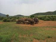 Afrikanische Elefantenherde im Pilanesberg-Wildreservat — Stockfoto
