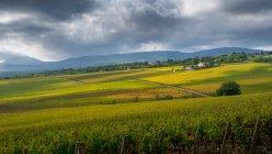 Vue panoramique sur le vignoble de Toscane, Pienza, Toscane, Italie — Photo de stock