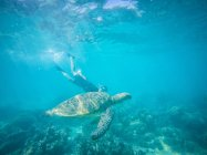 Green turtle and teenage girl swimming underwater — Stock Photo