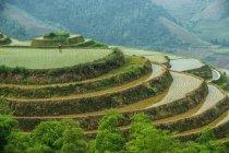Vue panoramique de rizières en terrasses, Guilin, Chine — Photo de stock