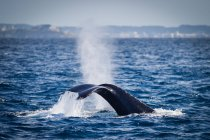 Scenic view of whale tail splashing in water — Stockfoto