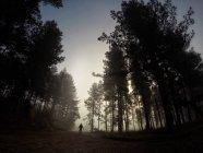 Людина йде по шляху в лісі, де туман — стокове фото