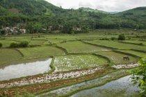Malerische Aussicht auf die Reisfelder, Vietnam — Stockfoto