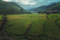 Живописный вид на рисовые поля на террасах Mu Cang Chai, YenBai, Vietnam — стоковое фото