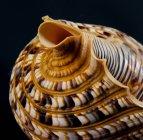 Nahaufnahme der Muscheln — Stockfoto