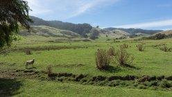 Живописный вид на овчарку в поле, Хорн-Вэйл, штат Виктория, Австралия — стоковое фото