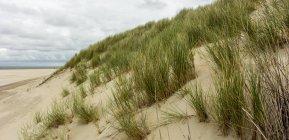 Мальовничим видом на піщані дюни, де Cocksdorp пляж, Нідерланди — стокове фото