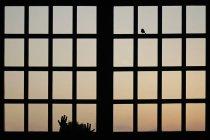 Silhueta de vista traseira da menina olhando pela janela em pássaro — Fotografia de Stock