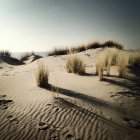 Vista panorâmica da dunas de areia e grama na praia, longas sombras — Fotografia de Stock