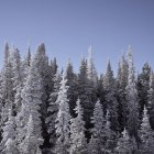 Vista panoramica di alberi coperti di neve congelati — Foto stock