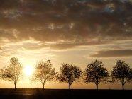 Vue panoramique sur la silhouette d'une rangée d'arbres au coucher du soleil — Photo de stock