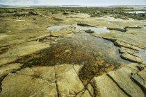 Vista panoramica di Pozza di marea costiera, Parco nazionale di Acadia, Maine, Stati Uniti — Foto stock