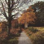 Munster, Irlanda, Killarney, camino de otoño en el Parque Nacional de Killarney, Kerry del Condado - foto de stock