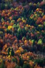 Aerial view of autumn trees in forest — Stock Photo