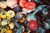 Vista dall'alto di zucche colorate a bizzeffe, cornice completa — Foto stock