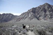 Живописный вид из двух дикие Беррос, первый каньон, Государственный парк красной скалы, Невада, США — стоковое фото