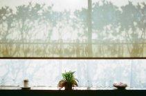 Pianta nella condizione di vaso sul davanzale della finestra con le ombre — Foto stock