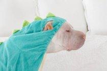 Портрет білий китайський шарпей собаки одягнений як зелений дракон, вид збоку — стокове фото