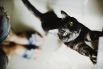 Милий пухнастий кіт стоячи йдуть вгору — стокове фото