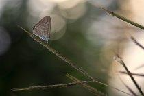 Nahaufnahme der Schmetterling sitzt auf einem Pflanzenstängel — Stockfoto