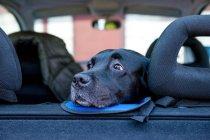 Сумно собака особа на Автокрісла фотографіях хтось дивитися вбік і очікування власників — стокове фото