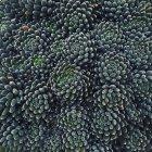 Крупный план зеленого красивые сочные растения фон — стоковое фото
