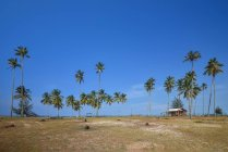 Scenic view of beach hut and palm trees on beach, Terengganu, Malaysia — Stock Photo