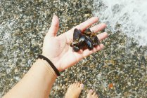 Female hand holding mussels in hand on beach — Stock Photo