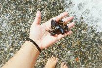 Mano femenina sosteniendo mejillones en la mano en la playa - foto de stock
